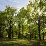 A Debreceni Nagyerdő I