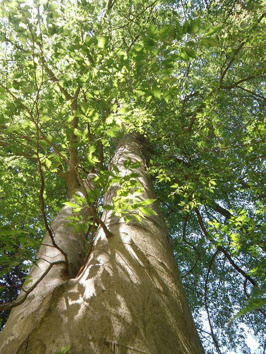 Az Alcsútdobozi Arborétum