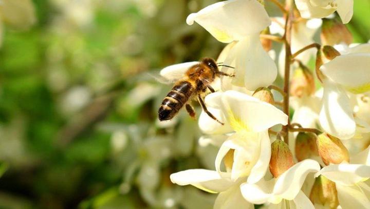 Méhészet a Kárpát-medencében