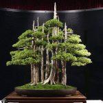 Bonszai, a miniatűr fák